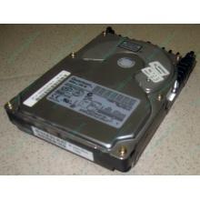 Жесткий диск 18.4Gb Quantum Atlas 10K III U160 SCSI (Кисловодск)